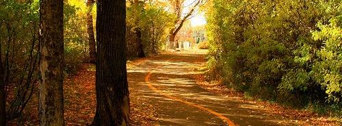 leafy road
